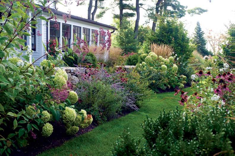 hydrangea arborvitae The Outdoor Room Pinterest