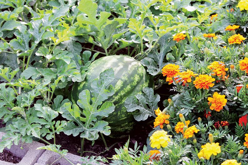Flowers And Vegetables For Your Cutting Garden Old House Online Old House Online