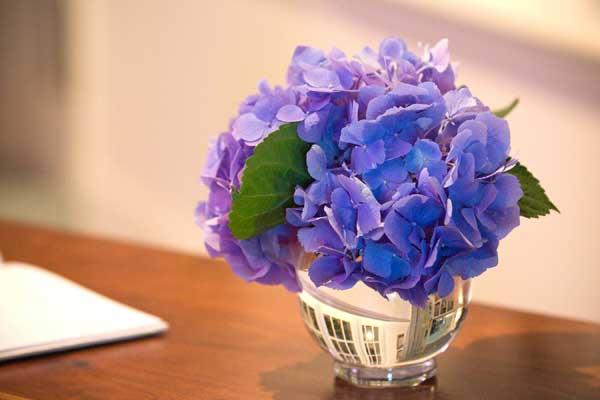 Best Hydrangeas For Historic Gardens Old House Online Old House Online